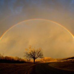 rainbow_elam_cr_2
